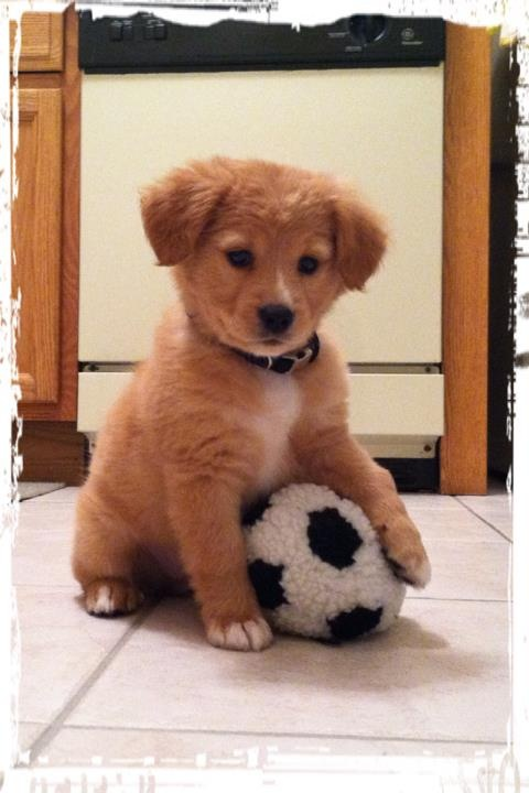the next soccer star...: Puppy Dogs, Cute Puppies, Animals, Soccer Ball, Pets, Puppys, Box