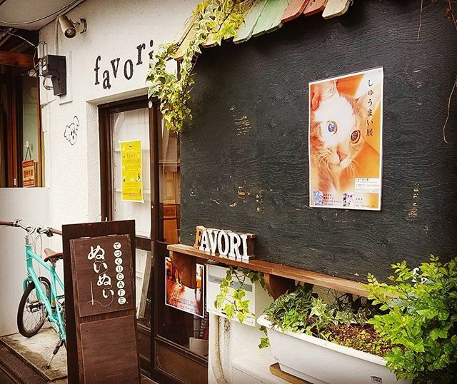 🐱しゅうまい展 28日まで開催中のファボリさん 移転前の最終展示 仕事と私用の合間 どうにか間に合いました✨ #横尾さやか さん #愛猫  #しゅうまいちゃん と #可愛いネコちゃん たち #ぬいぬいカフェ さんとしては ラストの #ぬいぬいカフェランチ