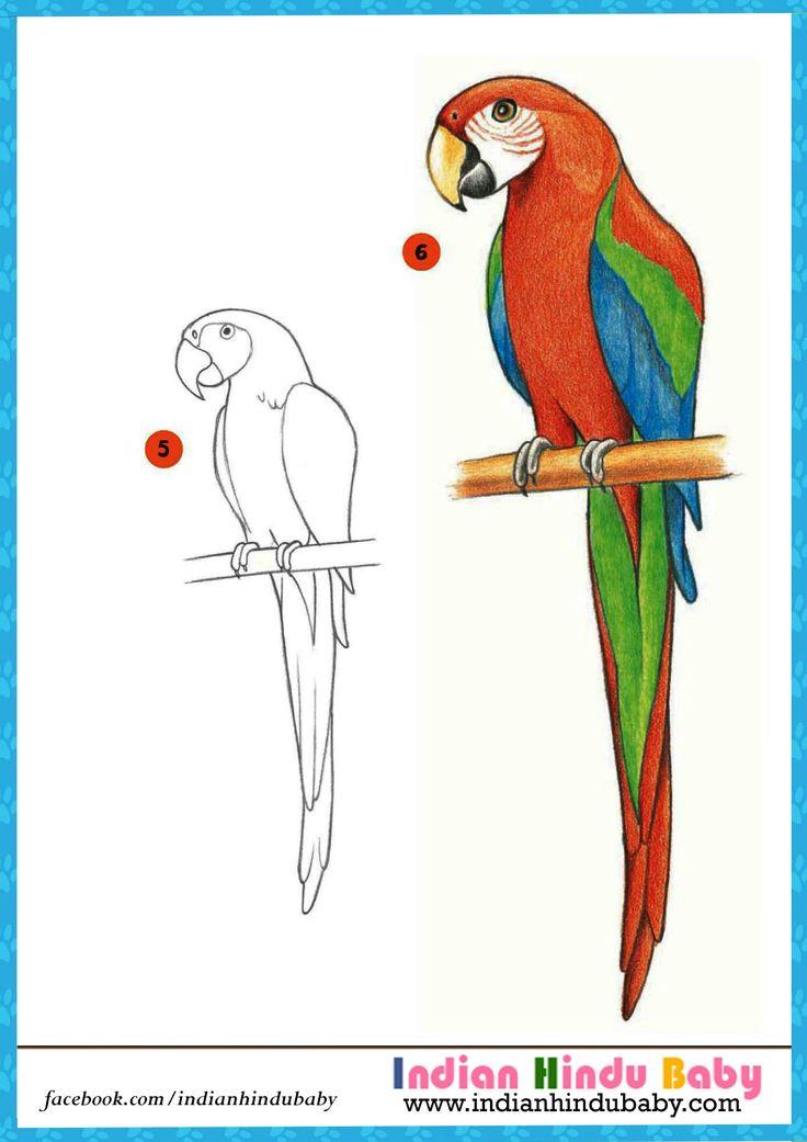 Parrot Drawing - Imgsite.biz