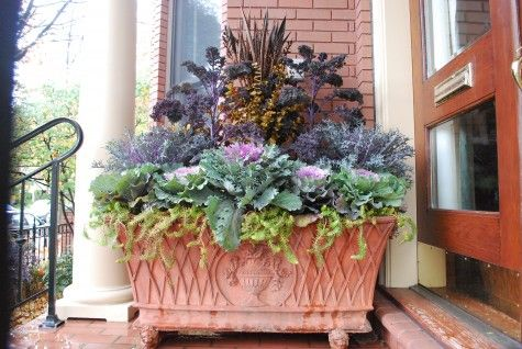 fall plantingThe Doors, Container Garden, Fall Containers, Winter Planters, Purple Cabbages, Front Doors, Fall Plants, Fall Planters Jpg,  Flowerpot