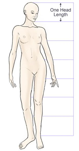 female anatomy proportions follow the links to doll making tutorials