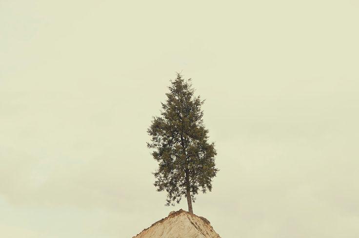 El último árbol  www.junejuno.com