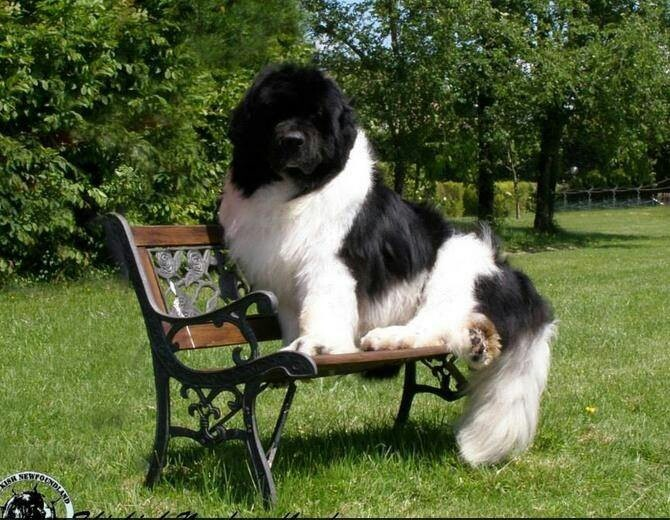 "* * "" Yoo would 'tink dey woulds make deez benches bigger fer larger peoples and huge pooches."""