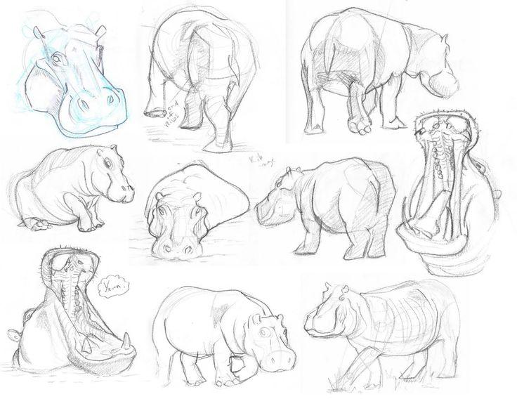 Hippos Amazing Hippos