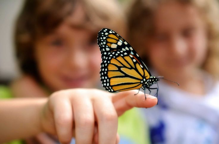 Love monarch butterflies? Get Milkweed!