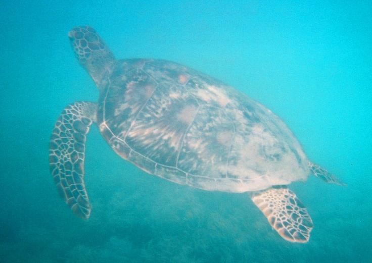 Great Barrier Reef (Low Isles), Queensland