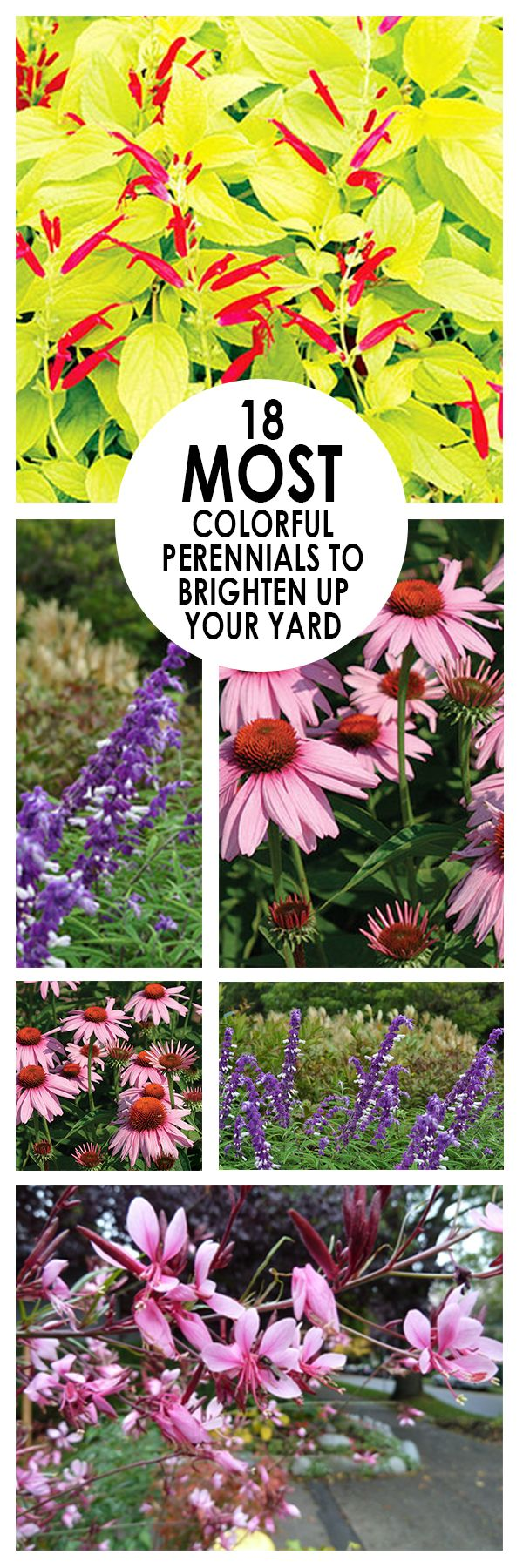 18 Most Colorful Perennials to Brighten Up Your Yard