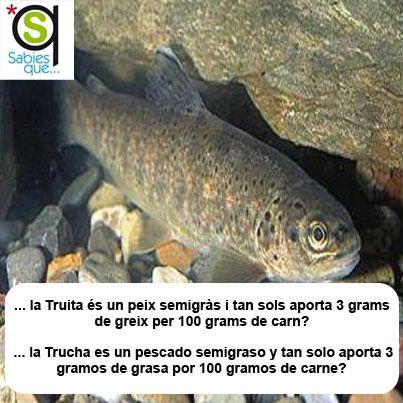 La #Trucha es un pescado semigraso y tan solo aporta 3 gramos de grasa por 100 gramos de carne / La #truita és un peix semigràs i tan sols aporta 3 grams de greix per 100 grams de carn
