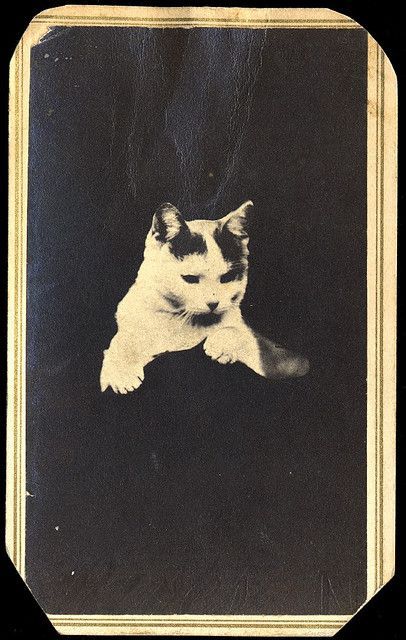 Title: Cat / opaque background  Maker: S.L. Upham & Fowler  Date: ca. 1875  Medium: albumen print  George Eastman House Collection   General information about the George Eastman House Photography Collection is available at http://www.eastmanhouse.org/inc/collections/photography.php.