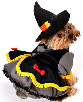 Scarecrow Witch Dog Costume!  Wizard of Oz Collection.  http://puprwear.com/
