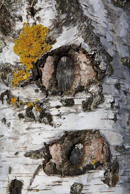 Birch Bark by Julie Shackson, via Flickr