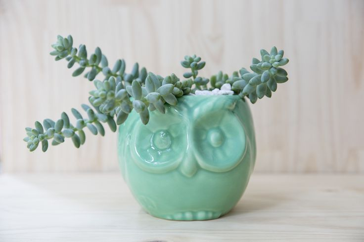 #buho #handmade #planter #ceramic #succulents Shop our products at www.habibiplantitas.com