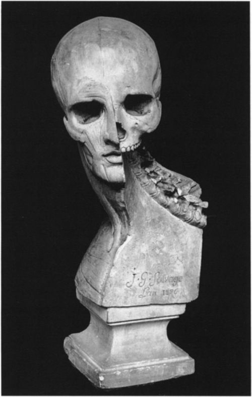 Bust showing musculature and skeleton