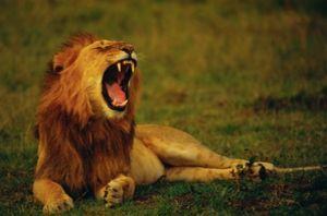 Impressionen einer Kenia Safari im Krüger Nationalpark.