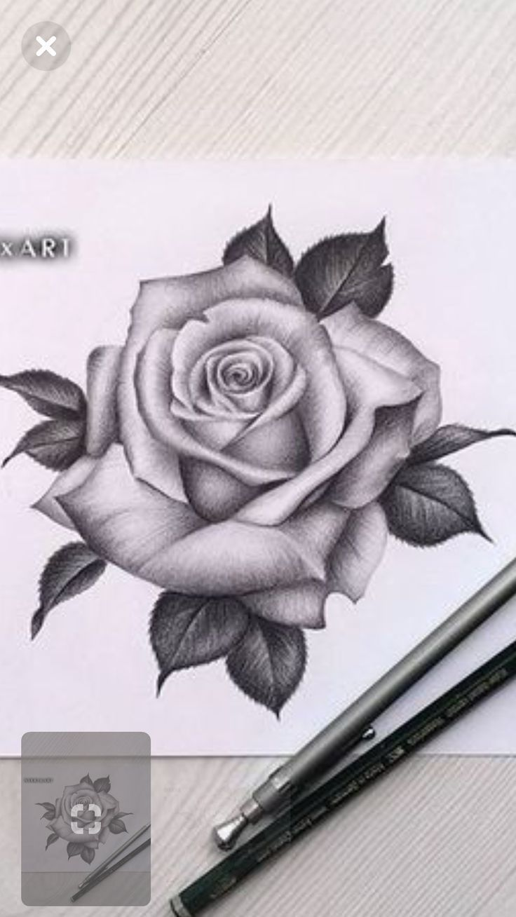 Draw Rose Draw Rose Draw Rose Rosetattooideas Tattooideasformoms Realistic Rose Tattoo Rose Flower Tattoos Roses Drawing