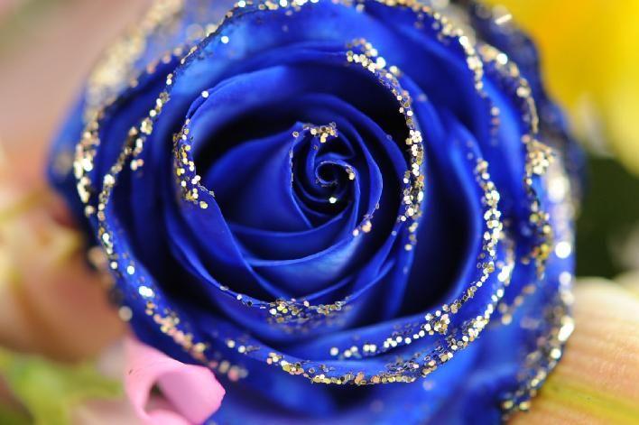 青いバラの花言葉は「奇跡」「神の祝福」「夢 かなう」「不可能・有り得ない」|photo/写真 デジタル@備忘録