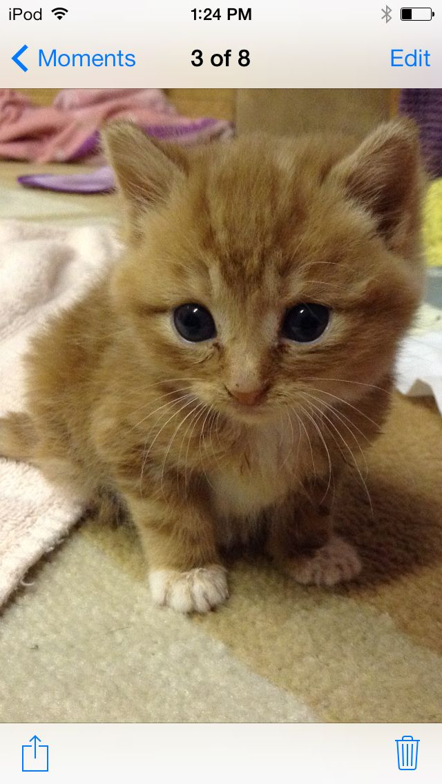 Cute little orange kitten