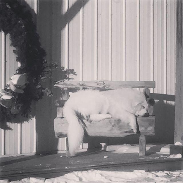 Brian enjoying the warm weather. #pineviewfarms #bigpuppy (scheduled via http://www.tailwindapp.com?utm_source=pinterest&utm_medium=twpin&utm_content=post180804743&utm_campaign=scheduler_attribution)