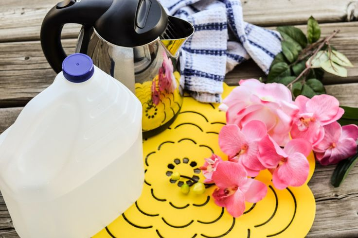 KITCHEN HACK; HOW TO CLEAN YOUR HOTWATER KETTLE - Simple way to clean your kitchen staple. Click to read details.