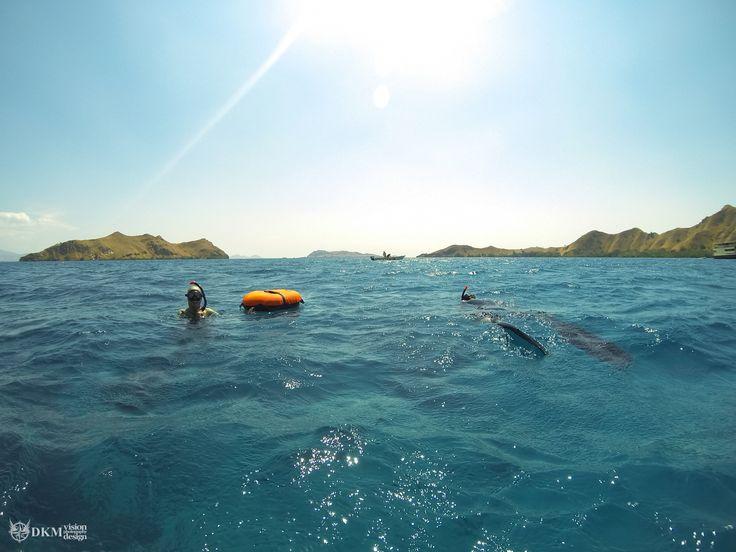 Fun dives in the Komodo national park with UberFreediveKomodo