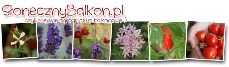 Ekologiczne środki ochrony roślin http://www.slonecznybalkon.pl/porady/ekologiczne-srodki-ochrony-roslin/ | Słoneczny Balkon