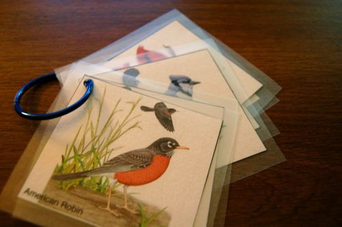 Bird watching cards to print out  Preschool