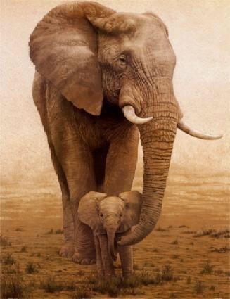Mother/baby elephants