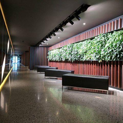 #fytogreenaustralia #fytogreen #architecture #architecturemagazine #architecture_greatshots #verticalgarden #plantsofinstagram #plant #urbanjungle #hydroponics #melbourne #victoria #sustainability #greenwall