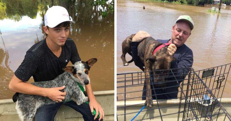 Padre e hijo rescatan los 40 perros que permanecen durante la inundación | aburrido Panda