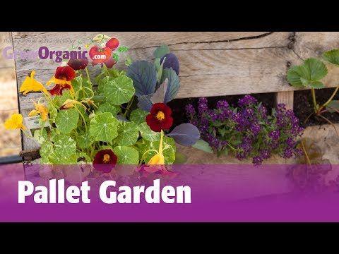 Pallet Backyard garden - http://www.freecycleusa.com/pallet-backyard-garden-2/
