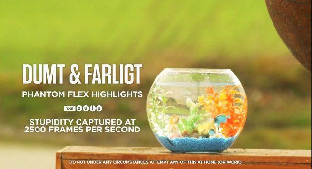 Kein schöner Einstieg für Aquarienfreunde, dann aber der Kracher. Buchstäblich.