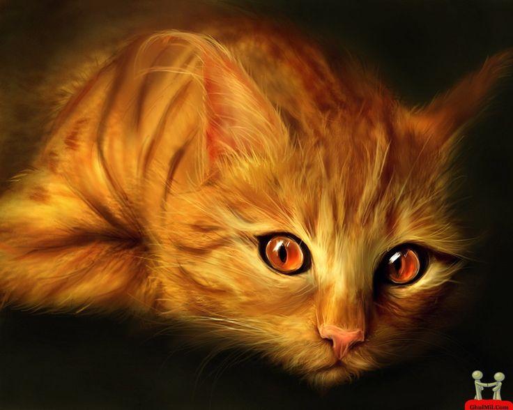 Beautiful Cat - Bing Images