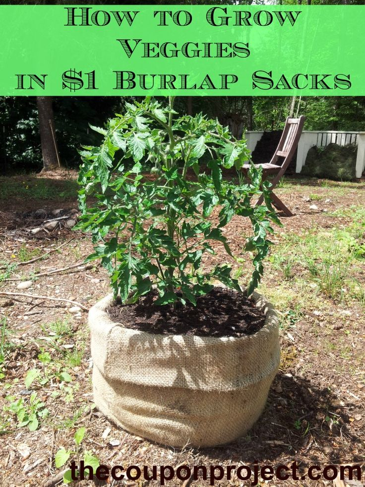 Grow food in dollar burlap sacks - perfect for small spaces. Best of all, you can throw them in the yard waste bin at the end of the season! #gardening