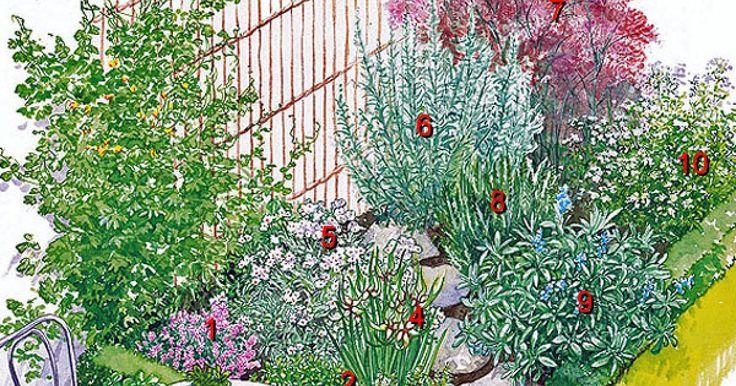 Mit Küchenkräutern und Heilpflanzen lassen sich attraktive Gartenecken gestalten. Beachten Sie dabei die unterschiedlichen Ansprüche der Pflanzen.