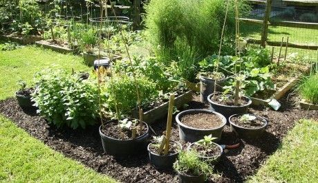 Tips for Container Vegetable Gardening