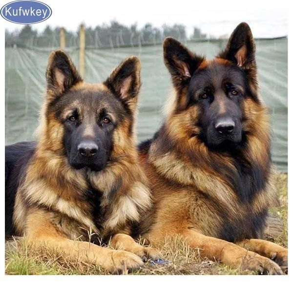 5d Diamond Painting Two German Shepherds Kit German Shepherd Dogs Shepherd Puppies Beautiful Dogs