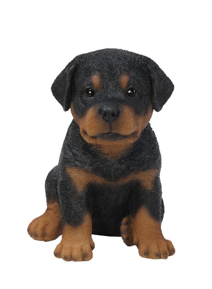 A Loja do Gato Preto | Cachorro Rottweiler #alojadogatopreto