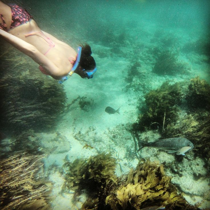 Snorkeling in Leigh, North Island, New Zealand
