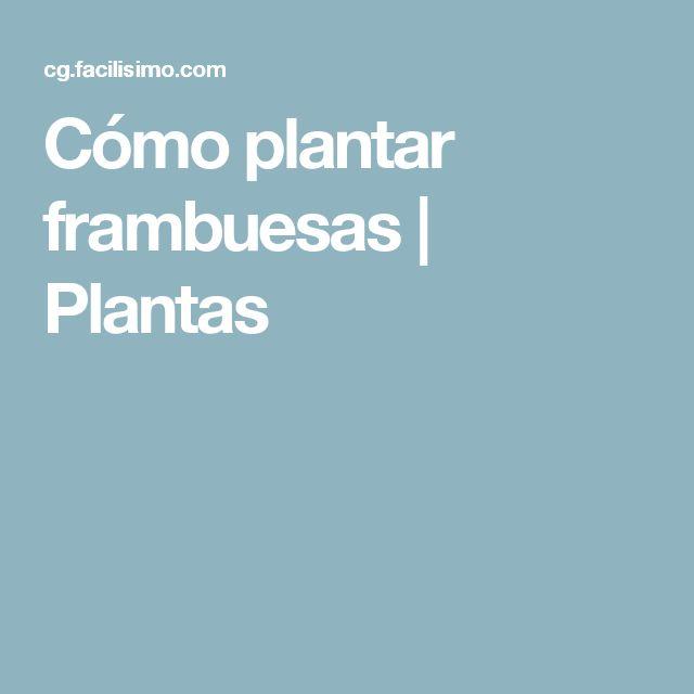 Cómo plantar frambuesas | Plantas