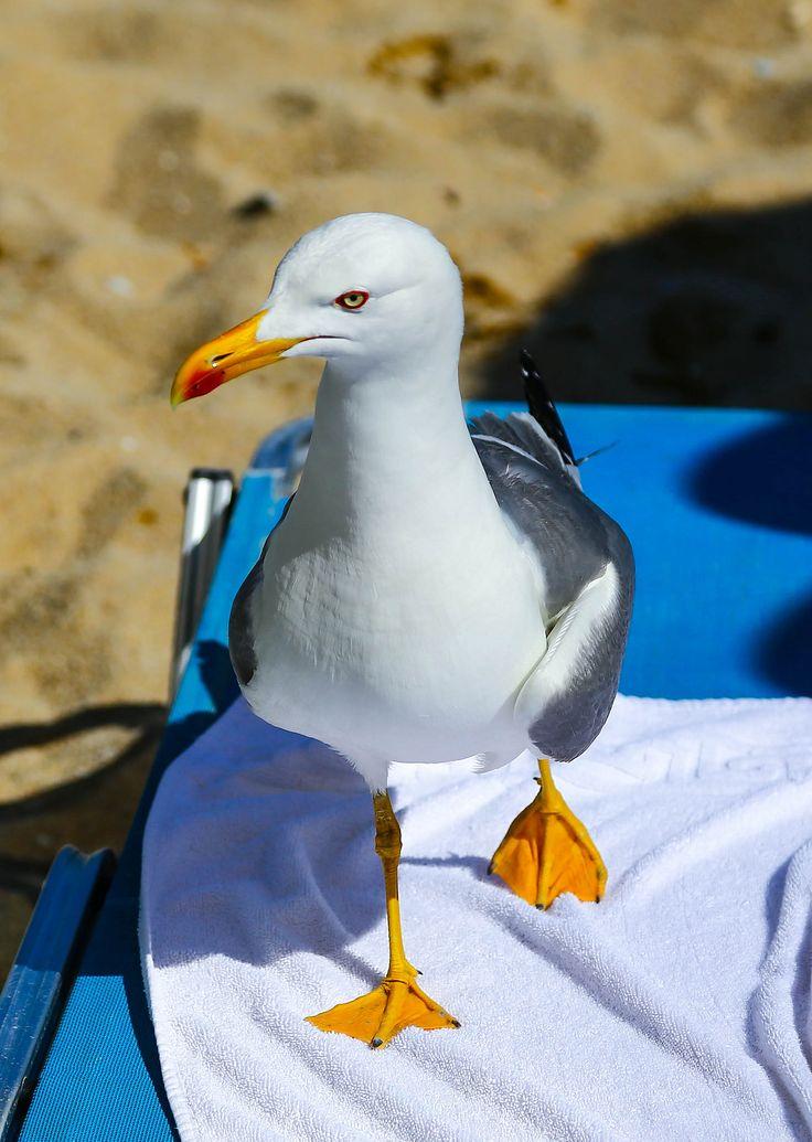Seagull at Batis Beach, Kavala, Macedonia n Thrace_ Greece
