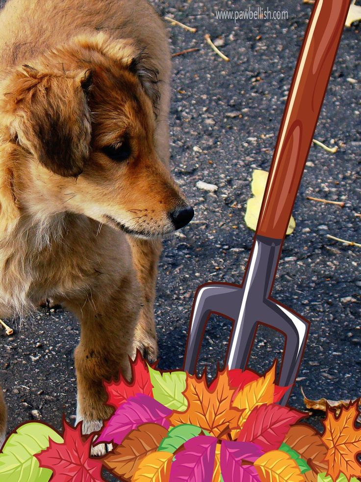 27 Dog Names That Translate to Autumn Dog names, Dogs