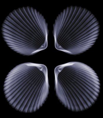 x-ray photography from British artist and photographer Nick Veasey