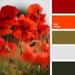 Color Palette #234