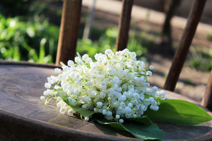 splendid flowers
