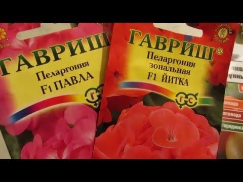 ЯНВАРЬ - СЕЕМ ГЕРАНЬ. - YouTube