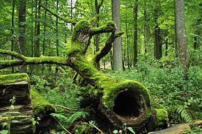 Litero.ch: Europas letzter Urwald
