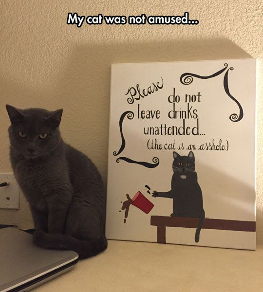 The Look On The Cat's Face Is Priceless