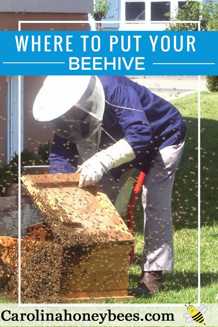 Finding the best location for your beehive matters.  Good hive placement increases your chance of becoming a successful beekeeper