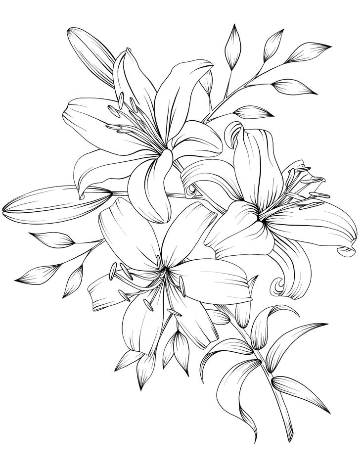 Adult Coloring Book Botanicum Flowers Digital Coloring 15 ...