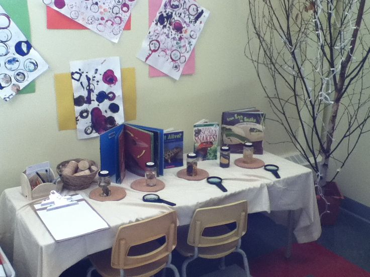 Materials are displayed to invite children to explore, discuss, draw, and question what they see